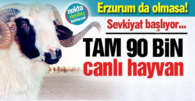 Türkiye'nin kurbanı Erzurum'dan...