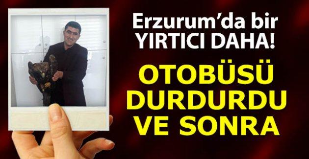 Erzurum'da bir yırtıcı daha!..