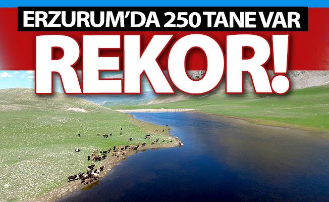 Erzurum'da bir Türkiye rekoru daha!
