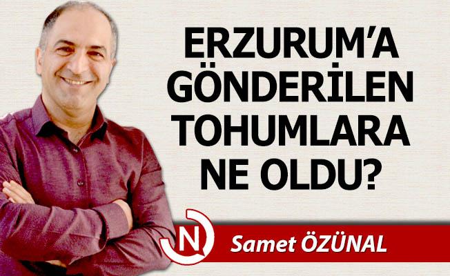 Erzurum'a gönderilen tohumlara ne oldu?