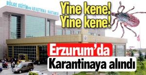 Erzurum'da yine kene!