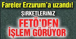 Fareler Erzurum'a uzandı!