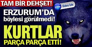 Erzurum'da böylesi görülmedi!