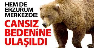 Erzurum#039;da ayı saldırısı!