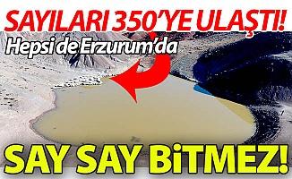 Erzurum'da say say bitmez!