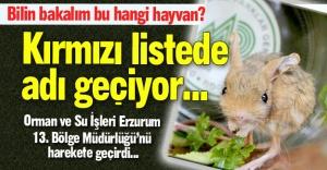 Erzurum'u harekete geçirdi...